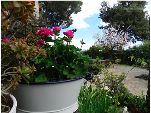 APRILE: fiori e contenitori